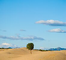 tree amidst desert  by jestudios
