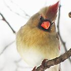Northern Cardinal (female) by lorilee