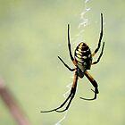 Banana Spider by SuddenJim