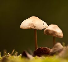 Mushrooms by Willem Hoekstra