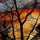 """Fiery Night"" by Elfriede Fulda"
