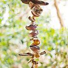 'Shells' by Ryan Devenish