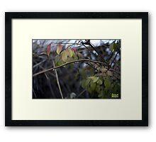 Colors of rain Framed Print