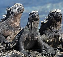 Marine Iguana II by Paul Duckett