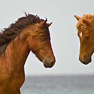 """Horse Play"" - wild horses face off on the beach by John Hartung"