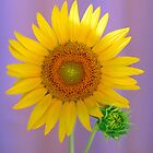 Sunshine Delight by Leanne Allen