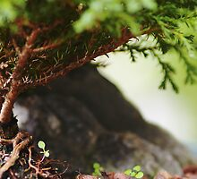 Cute Bonsai tree by Courtney Gillan