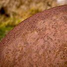 Rusty Buoy by photodivaanna
