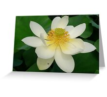 Kirsten Smith's 'heart of the lotus' Greeting Card