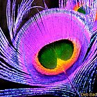 Purple Peacock by Deb  Badt-Covell
