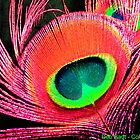 Hot Pink-Orange Colored Peacock Feather by Deb  Badt-Covell