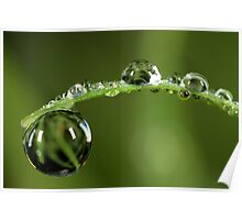 Morning Dew Drops Poster