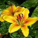 Bright Yellow Lilies by LoneAngel