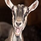 """I'm Baaaad"" - goat has goofy expression by John Hartung"