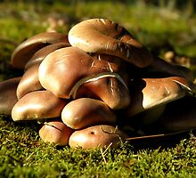Shroom Pile by Sharon Woerner
