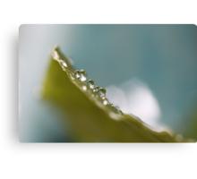 Climbing up a Leaf  - JUSTART © Canvas Print