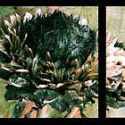 Dried artichoke flowerhead by Anna Goodchild