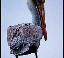 Louisiana State Bird, The Brown Pelican by Cheryl  Snow