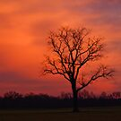 The Tree by Dave Parrish