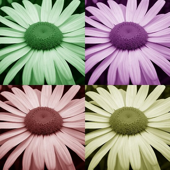 Big Daisy by Christy  Bruna