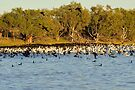 Birds on Longreach Waterhole - View Large by Alwyn Simple