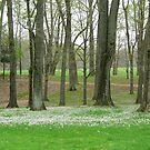Trees Budding in Spring by wrathko