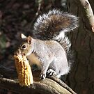 The Squirrel and the sweetcorn..1 by poohsmate