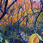 Autumn leaves- Regents Park by maashu
