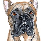 Cash the Boxer by Yvonne Carter