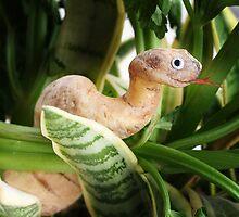 Cassava Snake by Vanessa Dualib