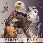birds of prey poster by R Christopher  Vest