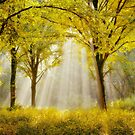 Forest Impression by LarsvandeGoor