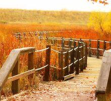 autumn bridge by Lacey Bediz