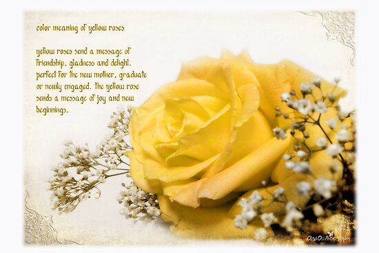 Yellow rose quot by olga redbubble