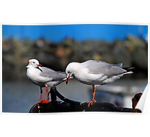 Seagulls Waiting For Lunch Poster