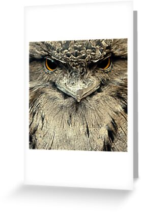 Tawny Frogmouth by Damienne Bingham