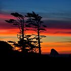 WIND SWEPT SUNSET by RoseMarie747