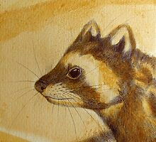 Marbled Polecat- Vormela peregusna by Polecatty
