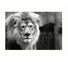 Themba, King of The Milwaukee County Zoo Art Print