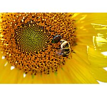 Get Out Of Here Beetle! Photographic Print