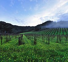 Foggy Vineyards  •  Highway 29  •  Calisotga, California by Richard  Leon