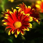 flowering sunshine by Rodney55