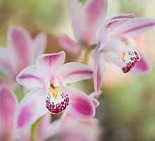 Simply soft orchids by Jacky Parker