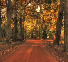 Autumn in Bridgetown, Western Australia by Elaine Teague
