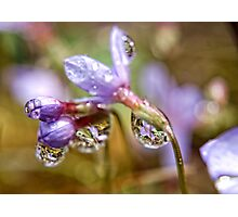 Reflection of a wild flower. Photographic Print