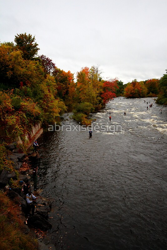 Salmon river pulaski ny by abraxisdesign redbubble for Salmon river ny fishing