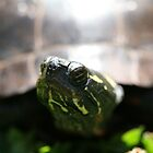 Turtle In My Yard  by abraxisdesign