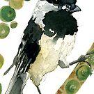 Poecile Atricapillus (Black Capped Chickadee) by Carol Kroll