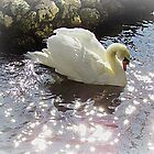 A Swan Dream by Judy Wanamaker