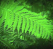 One  large leaf from Tree Fern by EdsMum